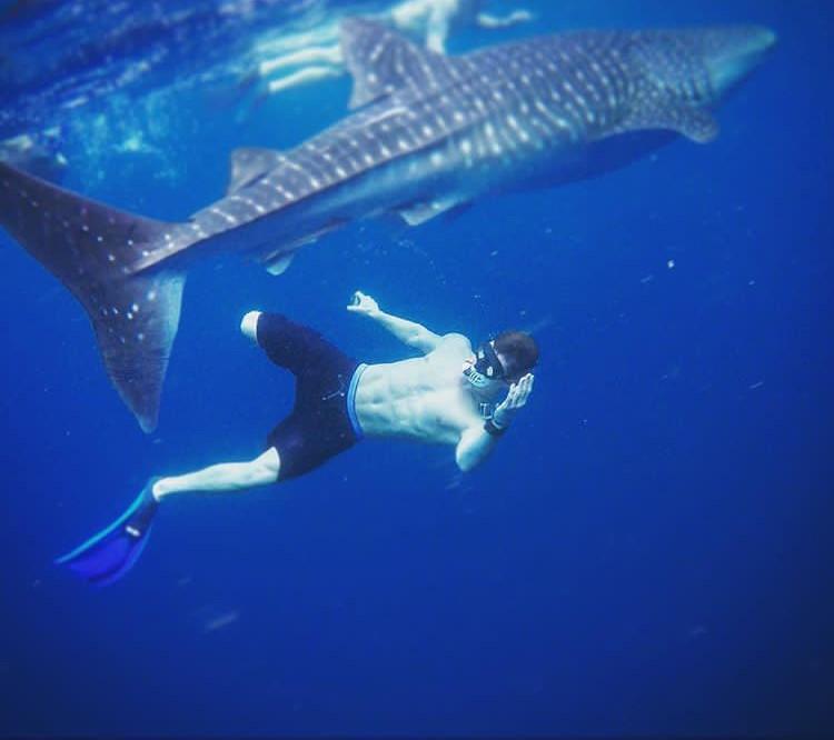 ocean-requin-isg